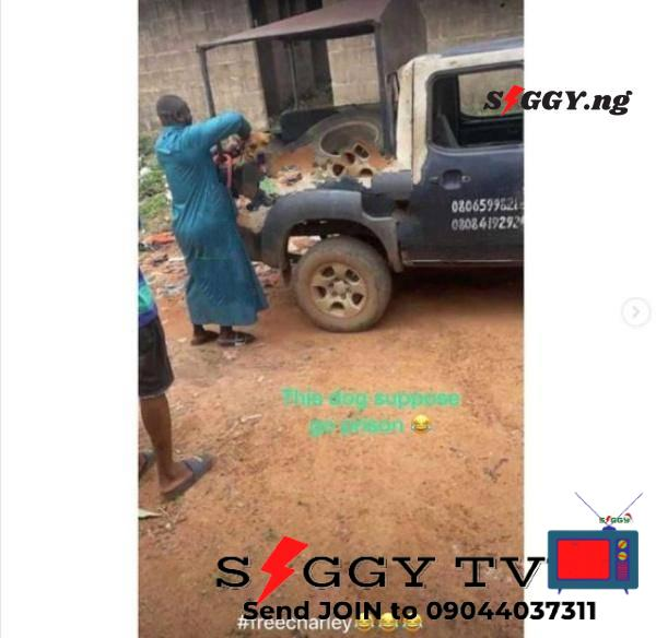 Police Arrest Dog For Biting Penis of AAUA Student - Siggy.ng